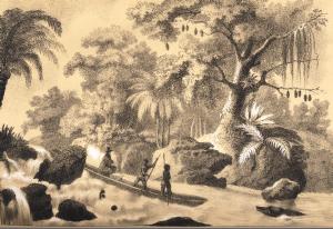 Afbeelding eigendom van de Belgische staat, onder bevoegdheid van de FOD Wetenschapsbeleid, in permanente leen aan het Agentschap Jardin botanique Meise.