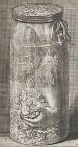Gravure van een preparaat van Frederik Ruysch.